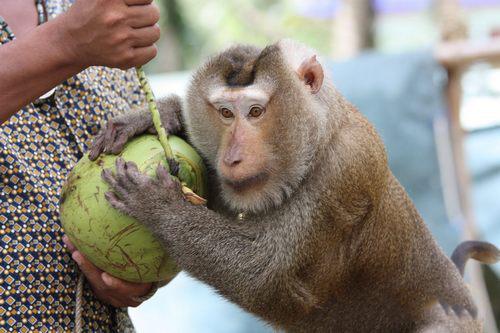 نمایش میمون ها