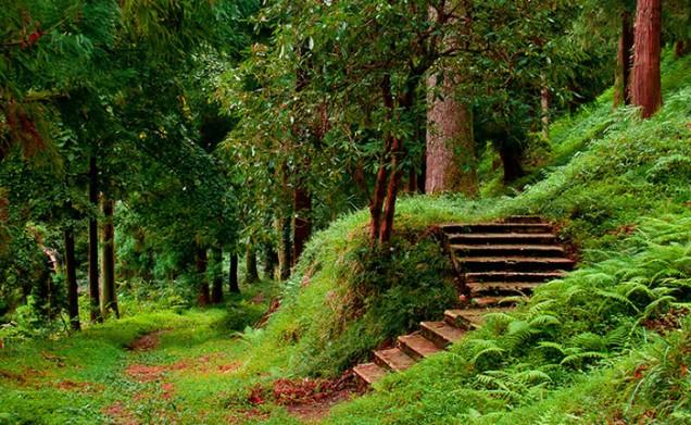 باغ گیاه شناسی باتومی گرجستان